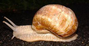 ¿Cómo desinfectar granjas de caracoles?
