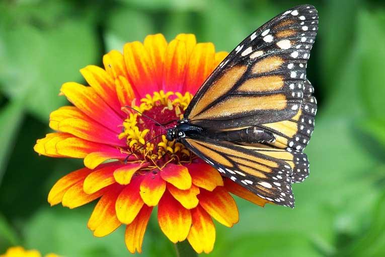 ¿Cómo combatir las alergias al polen?