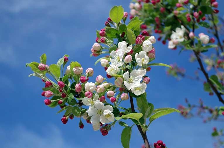 factores que pueden influir en las alergias de la primavera