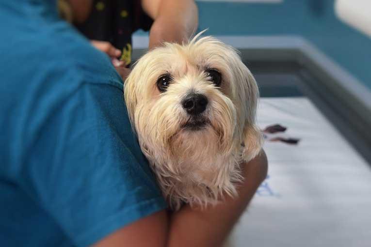 prevención de enfermedades en clínicas veterinarias con ozono