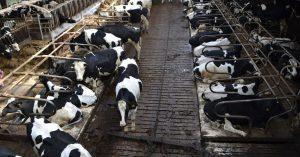 ¿Cómo desinfectar granjas de bovino?