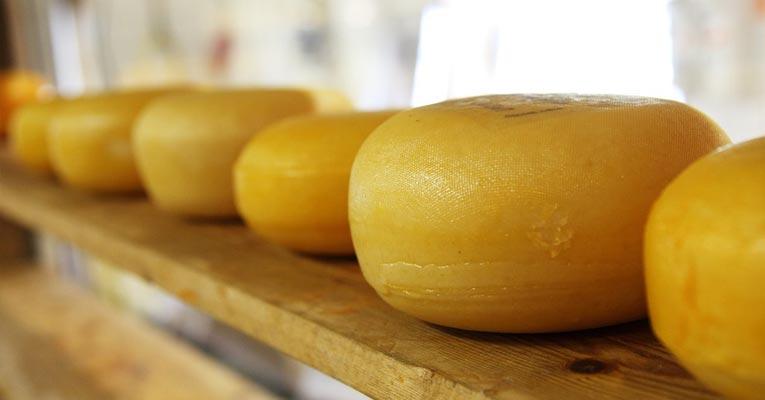 como eliminar ácaros del queso