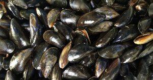 conservación de moluscos y desinfeccion