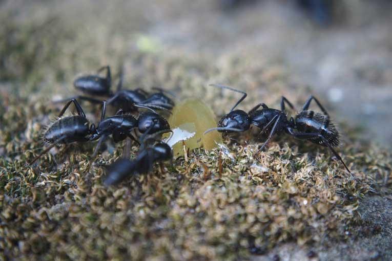 problema de las plagas de hormigas