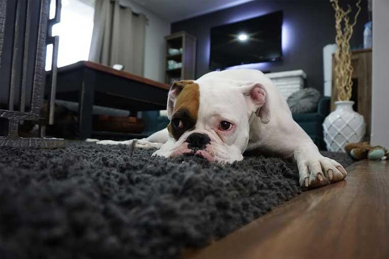 ¿Como eliminar olores de perro?