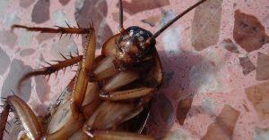 ¿Cómo eliminar plagas de cucarachas?