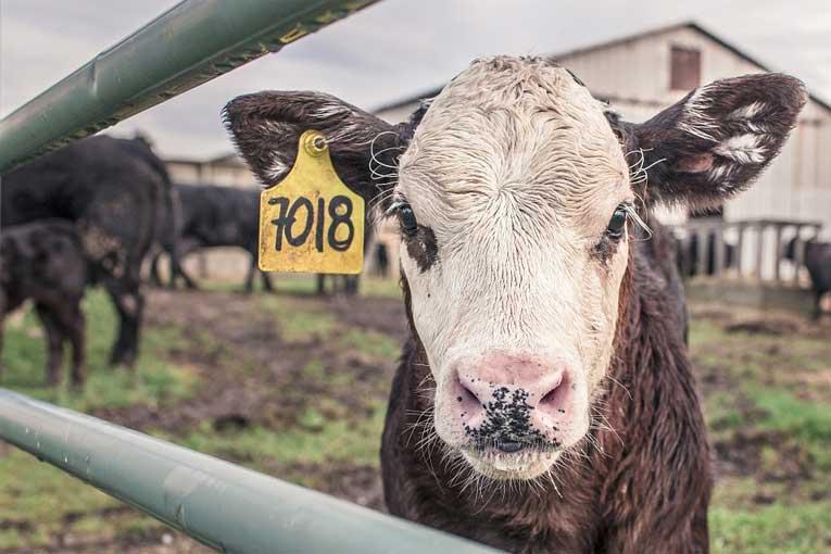 Desinfección de granjas de animales con generadores de ozono