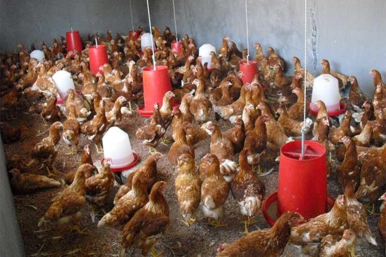 desinfectar granjas con ozono