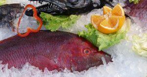 Estudio: conservación de pescado con hielo líquido ozonado