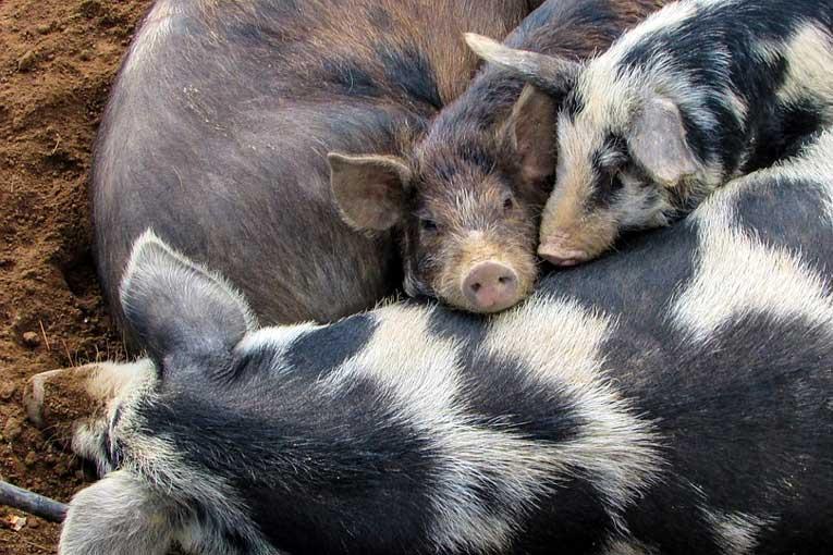 generadores de ozono para granjas de animales