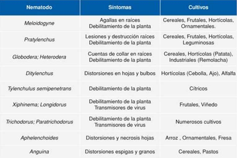 Síntomas y cultivos susceptibles a los principales nematodos fitoparásitos en España.