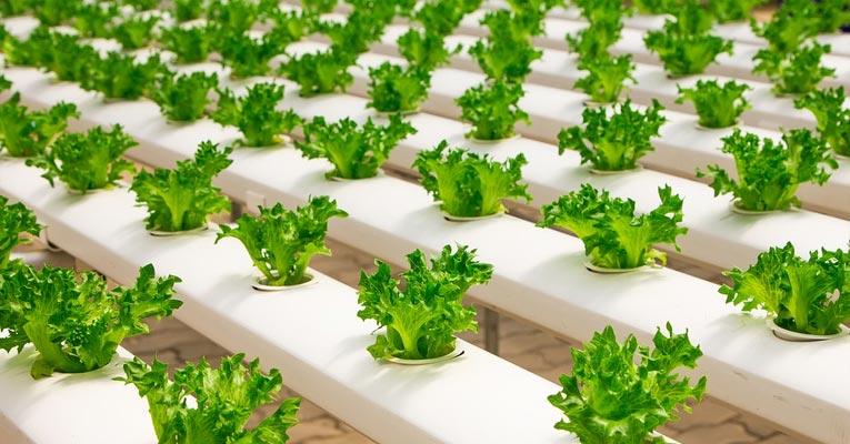 Tratamiento de agua con ozono en cultivos hidrop nicos for Carrefour arredo giardino 2017