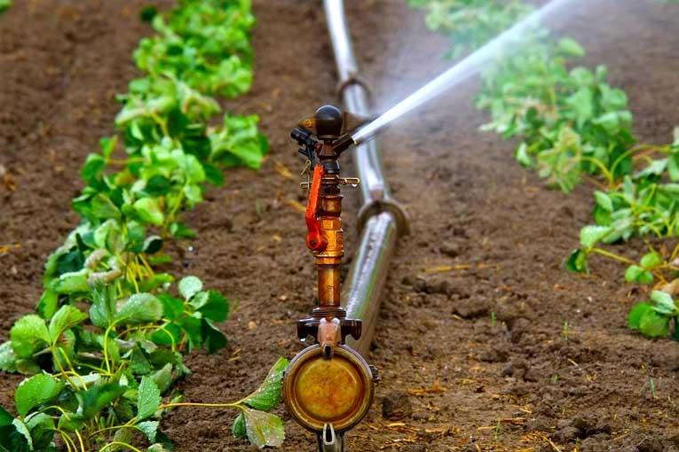 uso de generadores de ozono en la agricultura