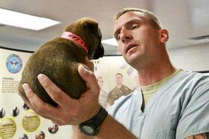 Desinfección con ozono en clínicas veterinarias