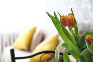 Eliminar olores sin productos químicos con un ozonizador