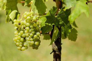 ozono en la industria vitivinícola