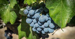 Soluciones con ozono en la industria del vino