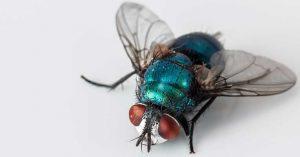 ¿Cómo evitar moscas y mosquitos y como eliminar estas plagas?
