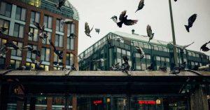¿Cómo prevenir plagas de palomas en edificaciones?