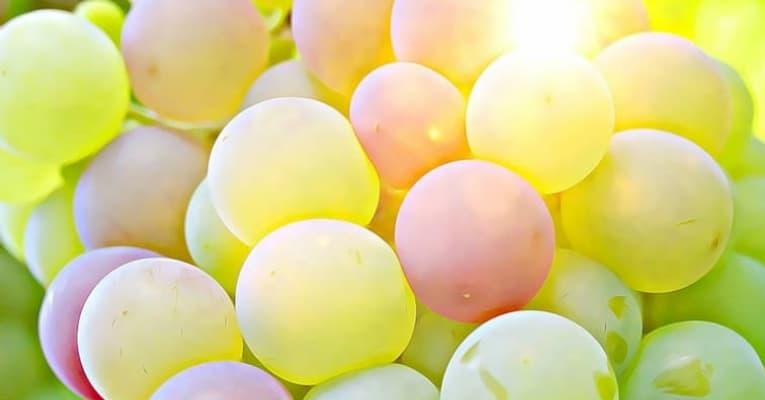 Estudio: Tratamiento con ozono de la uva Crimson Seedles