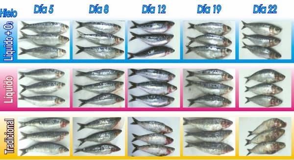 evolucion visual pescado a lo largo del almacenamiento